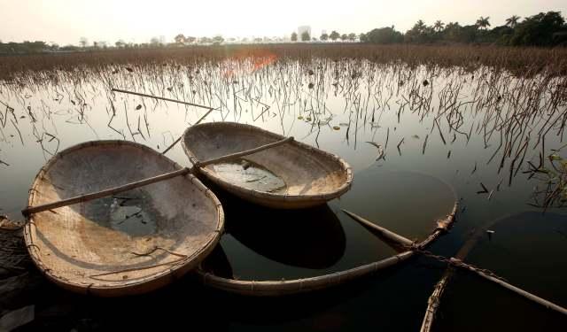 Foto: Barcos de bambú se ven parcialmente sumergidos cerca de un campo de flores de loto en el Lago del Oeste en Hanoi. REUTERS / Kham