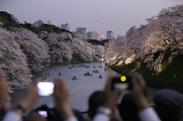 """Varios visitantes toman fotos de varios cerezos en flor a orillas del foso Chidorigafuchi en Tokio (Japón) hoy, lunes 30 de marzo de 2015. Los japoneses disfrutan estos días del """"sakura"""", la época de los cerezos en flor, cuando familias y amigos se reúnen a la sombra de estos árboles para dar la bienvenida a la primavera, una costumbre que cada vez atrae más turistas. EFE/Kimimasa Mayama"""