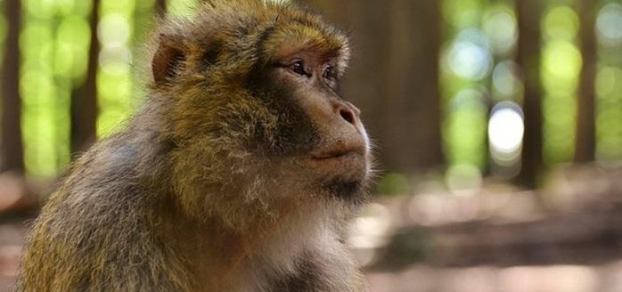 Se podrían extinguir más de mil 700 especies para 2070