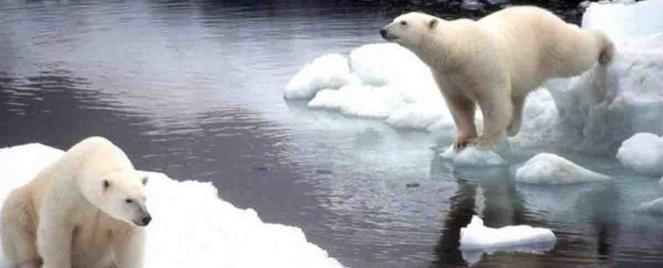 Hielo del Ártico se derrite a ritmo alarmante, revela estudio