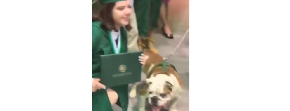 Perrito se come el diploma de su dueña, ¡en plena graduación! (VIDEO)