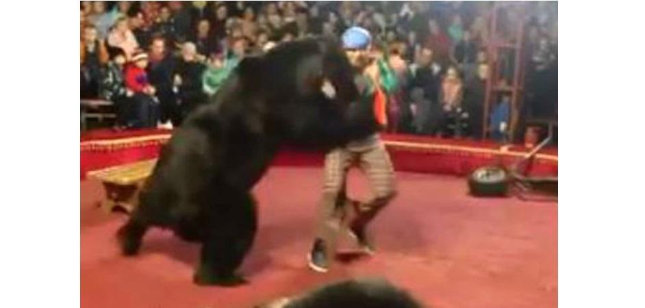 Oso ataca a su domador en circo (VIDEO)