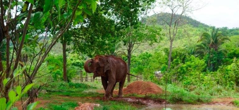 """Liberan a """"Ramba"""" en Brasil, elefanta maltratada en circos (FOTOS)"""