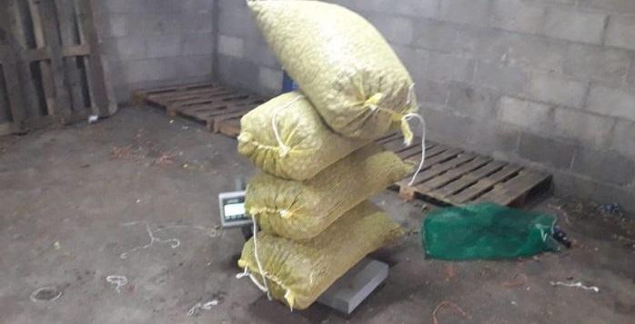 Asegura Estatales 164 kilos de nuez robada en Rosales