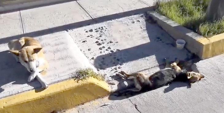 Perro callejero tiene 3 días velando a su compañero muerto