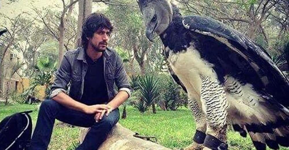 Águila harpía, el gigantesco animal que confunden con personas disfrazadas
