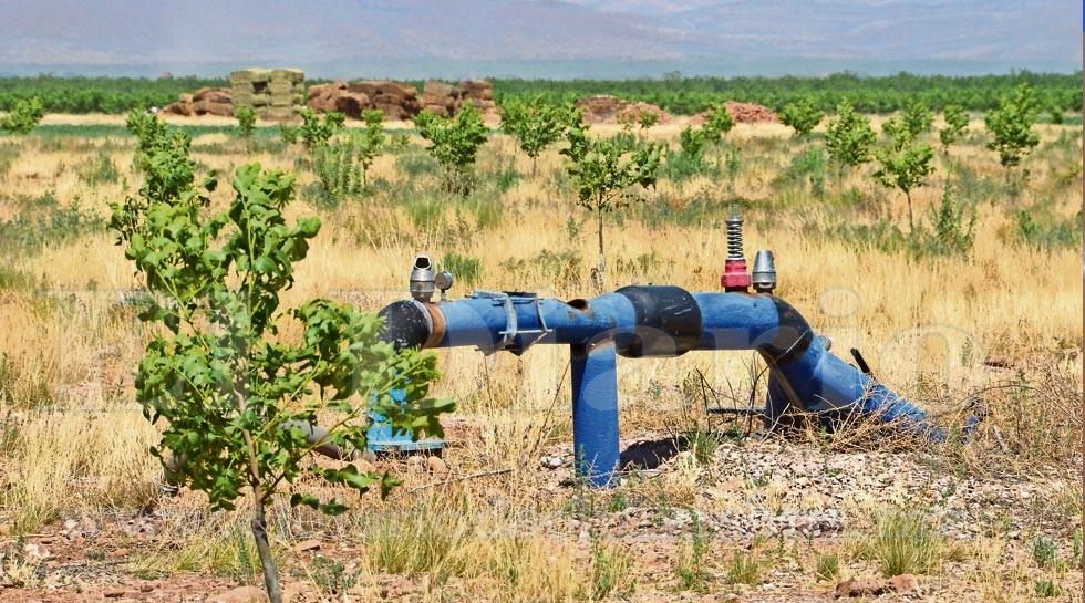 Afectará falta de agua al campo: Ceach