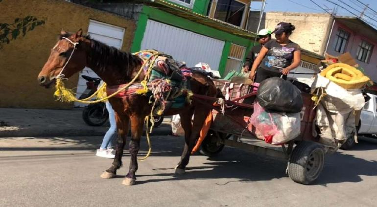 Prohíbe Ecatepec el uso de caballos y asnos para recolección de basura