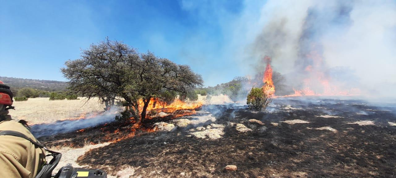 Arrasa incendio con 500 hectáreas en una comunidad de Cuauhtémoc