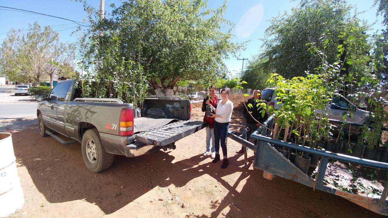 Cuauhtémoc > Dona Gobierno Municipal casi 5 mil árboles en los últimos 18 meses