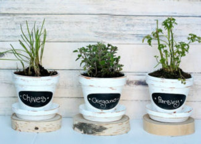 Grow-Your-Own-Herbs