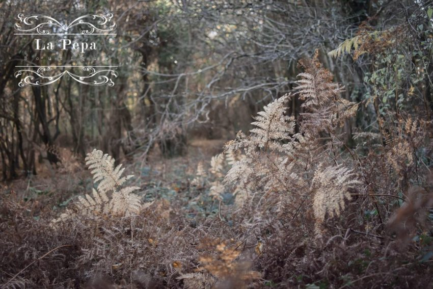 Wild Walks | In the Field of Ferns at Black Down 3