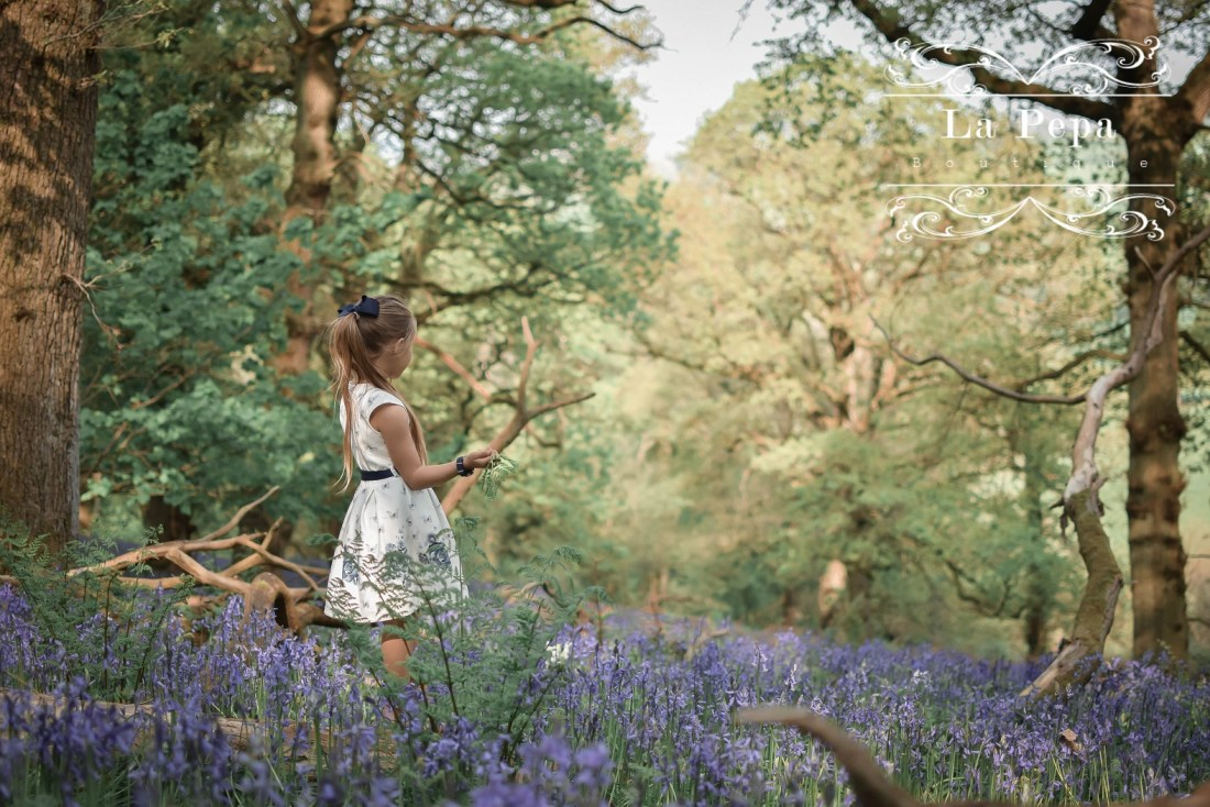 Wild Walks | Forest Bathing In the Sea of Bluebells 5