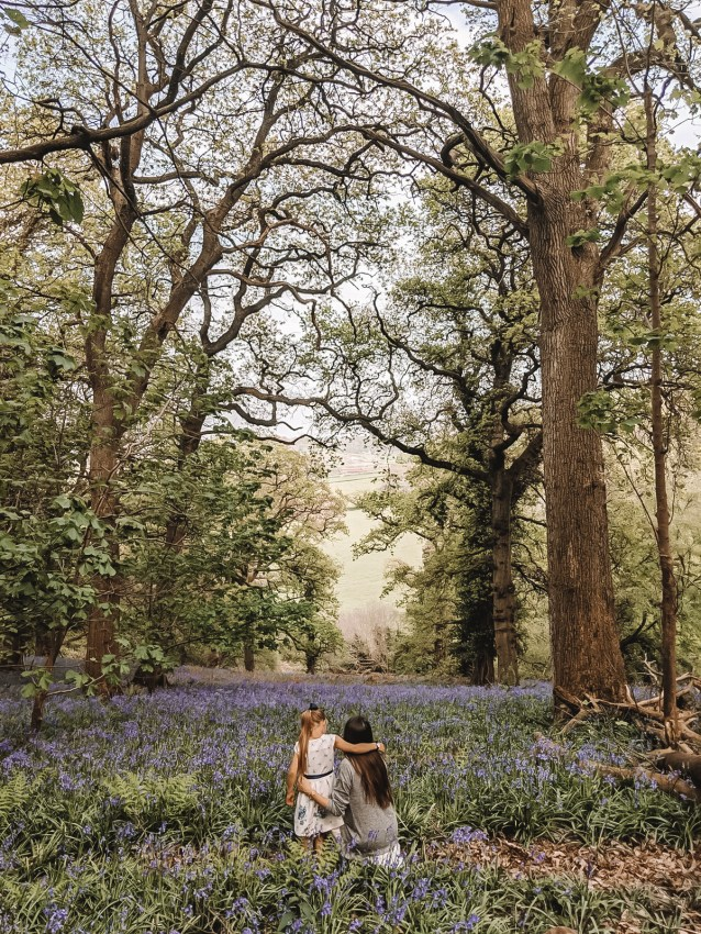 Wild Walks | Forest Bathing In the Sea of Bluebells 6