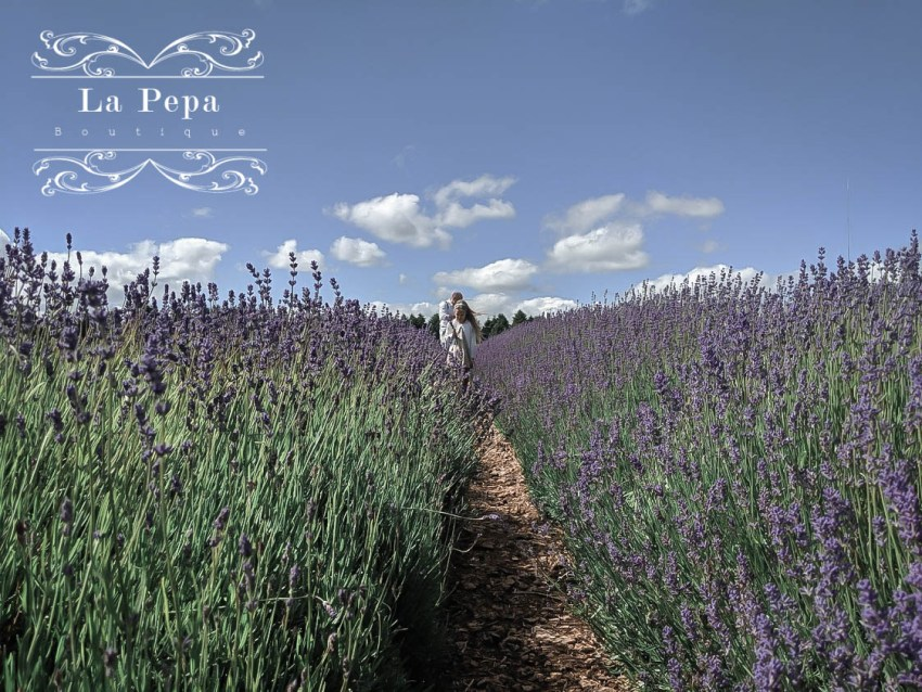 Green Travellers | A Day in Cotswold Lavender Farm