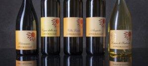 i nuovi vini