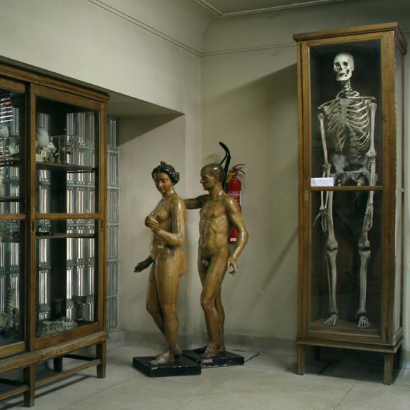 museoanatomiaAdanyEvaconGigante2
