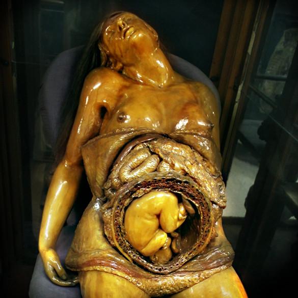 museoanatomiaembarazadapmedio