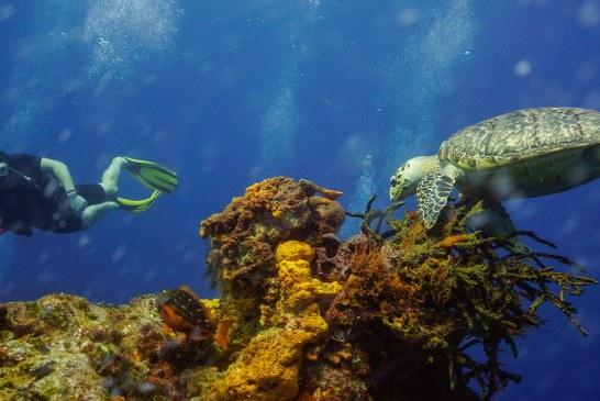 L'île de Cozumel – Le Paradis de la plongée et du snorkeling au Mexique ! (Videos)