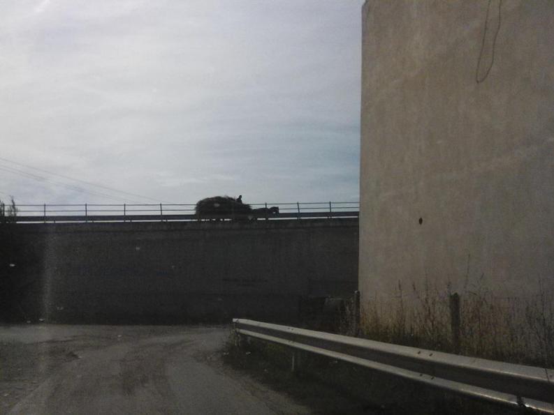 Un carro a trazione animale in Albania