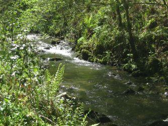 El Bosque animado, Cea Asturias