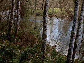 River Piloña