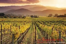 vino california1