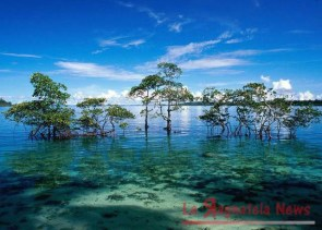 havelock-island-isole-andamane_1