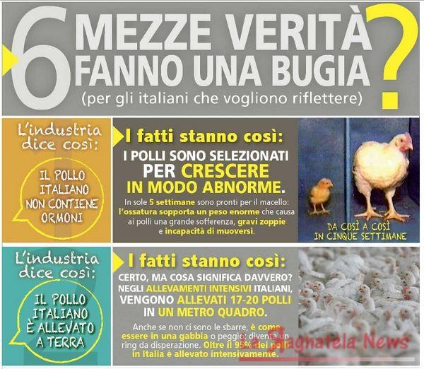 allevamenti_polli_antibiotici_infografica