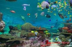 eilat aquarium