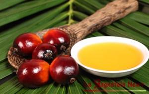 olio-palma-2