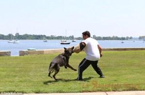 braccio cane