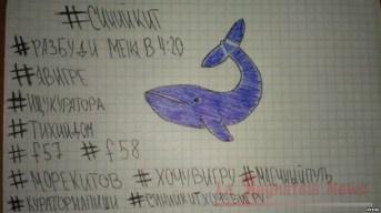 Blue_Whale_4