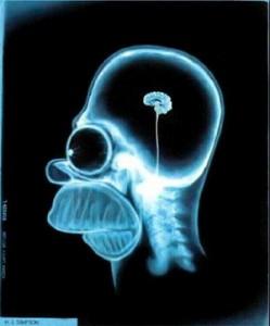 homer cerebro 1 249x300 ¡Comer para ser feliz!