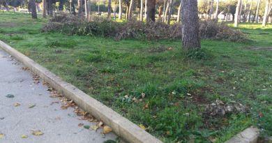 Aversa. Segnalazione del cittadino: erba alta, degrado ed abbandono al Parco Pozzi