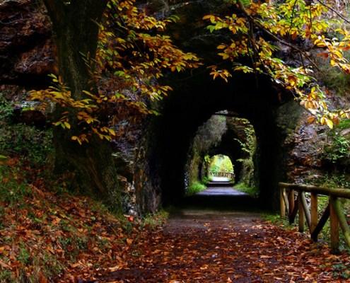 Senda del Oso cerca casa rural L'Arboleu Asturias Teverga