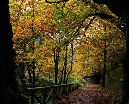 Senda del Oso alrededores casa rural L'Arboleu Asturias Teverga