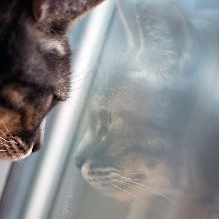 reflet-chat-gris-kennedy