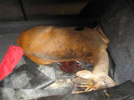 braconnage chasse oncfs faune fusil chevreuil saisie - LA REP Photo