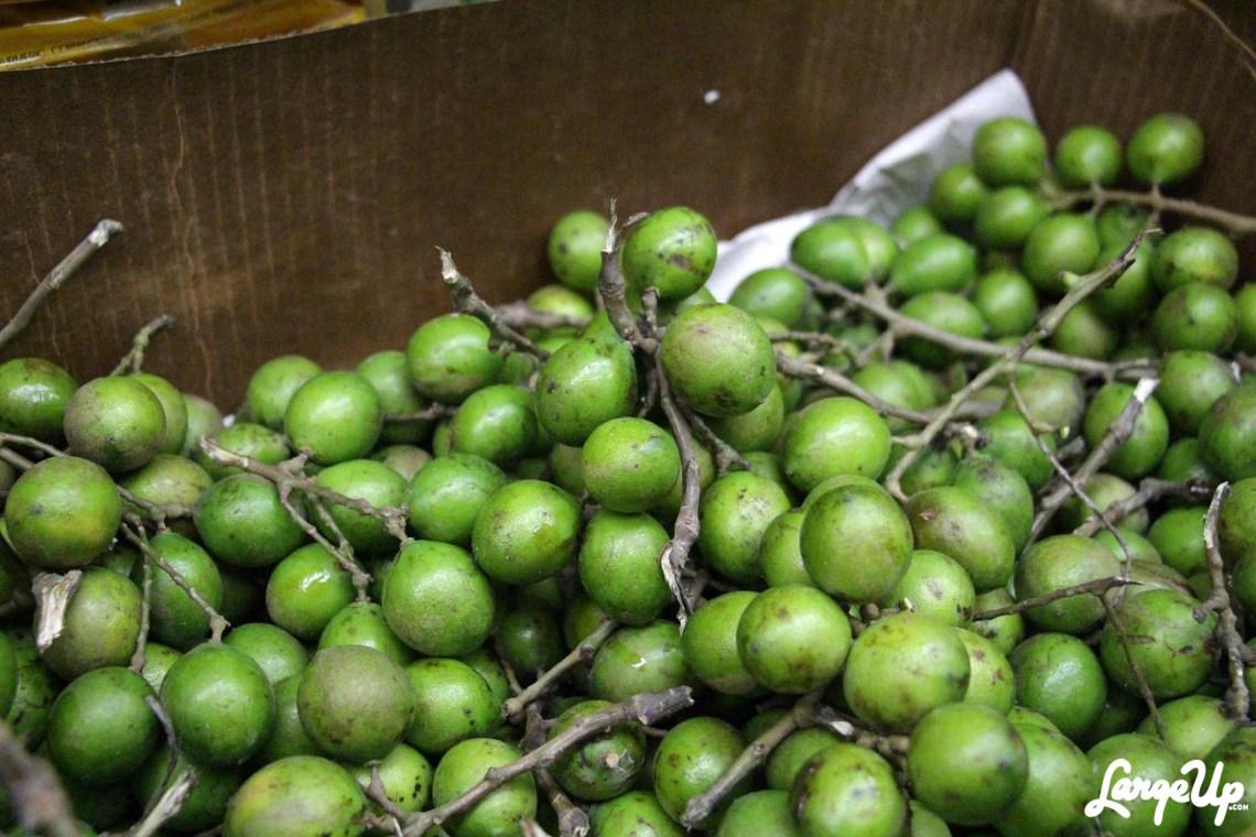 caribbean-pot-3-guineps