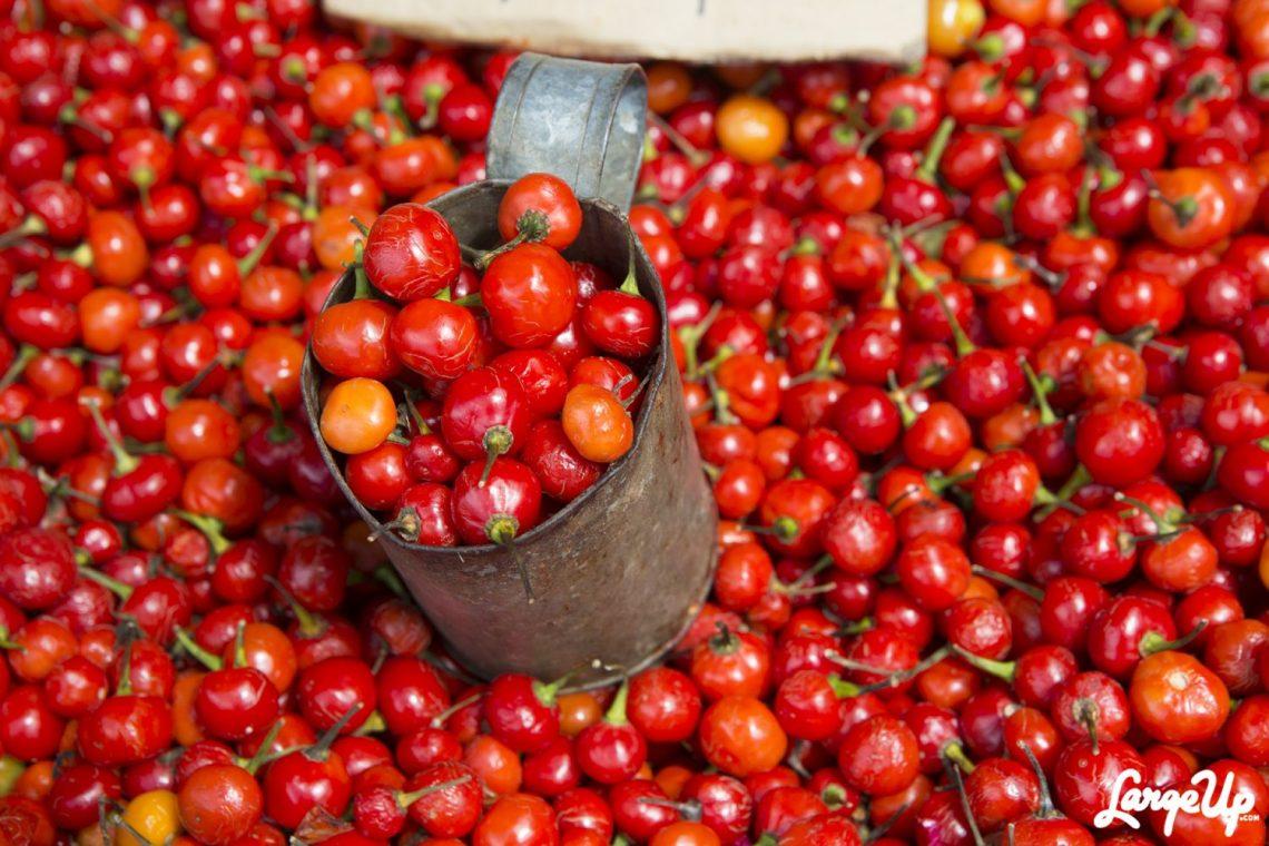 wiri-wiri-pepper-guyana