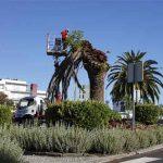 corte_palmeiras