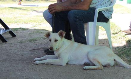 Quirófano Móvil de Mascotas en Vecinal Las Quintas