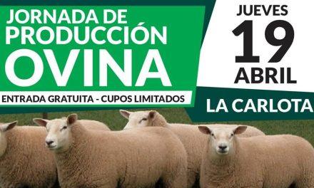 Jornada de producción ovina en La Carlota