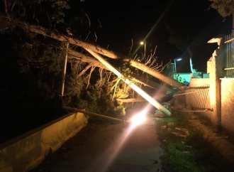 Taranto sferzata dallo scirocco, alberi abbattuti dal vento