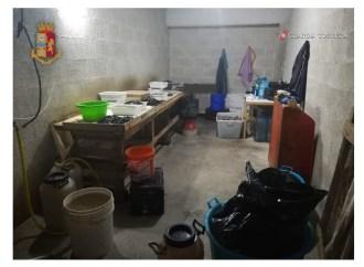 Cozze sgusciate e confezionate in un garage