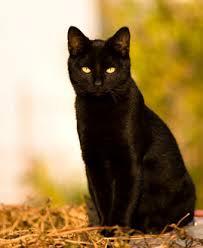 Το κλάμα της γάτας αποκάλυψε το μακάβριο εύρημα