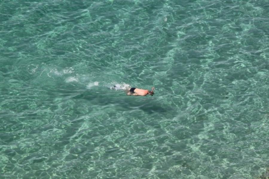 Βούτηξε να κολυμπήσει με ακίνδυνο καρχαρία αλλά ήταν σαρκοφάγος λευκός (video)