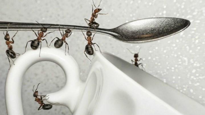 Πώς να κρατήσετε τα μυρμήγκια μακριά από το σπίτι σας