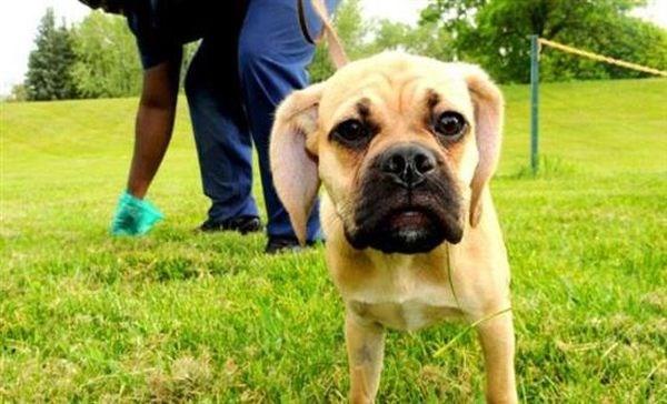 Πρόστιμο μέχρι 300 ευρώ για τα κακά του σκύλου - Ενημερωτικές πινακίδες θα τοποθετήσει ο Δήμος